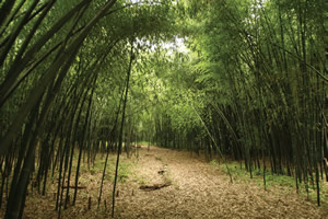 outdoor learning spaces: bamboo grove
